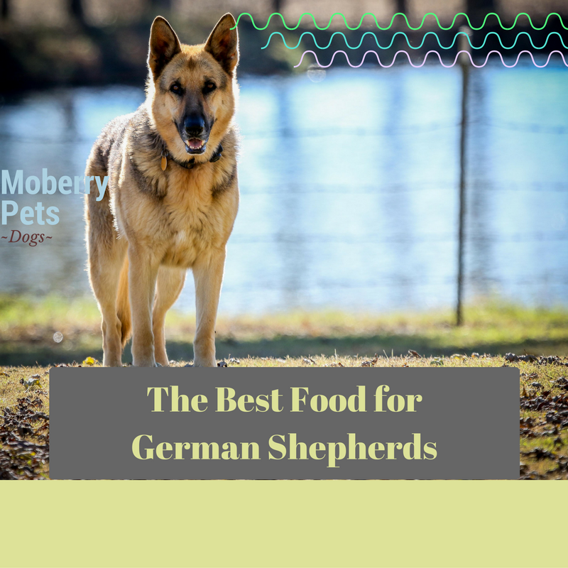 Best Apartment Pets: Best Dog Food For German Shepherd